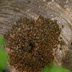 Coloney of insects on a tree